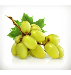 Bunch of grapes icon vector image