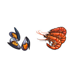Sketch crayfish lobster mussels set vector