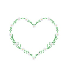White Yarrow Flowers in A Heart Shape Frame vector image