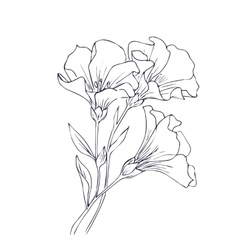 Hand drawn with flowers vector image vector image