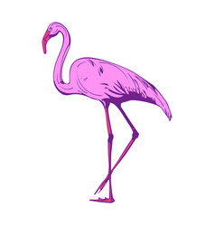 beautiful pink flamingo on a white background vector image