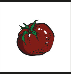 Color sketch tomato vector