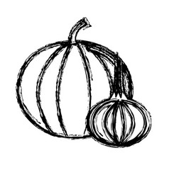 Contour pumpkin and garlic vegetable icon vector
