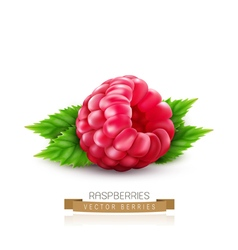 Isolated raspberry with green leaves vector