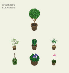 Isometric flower set of grower flowerpot peyote vector