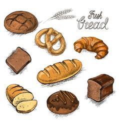 set fresh bread and buns hand drawn vector image