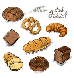 Set of fresh bread and buns hand drawn vector