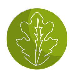 Sticker delicious leaf lettuce organ food vector