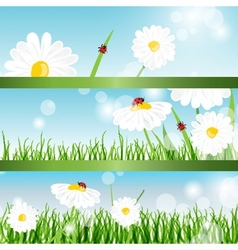 Summer banners with daisy and ladybugs in green vector image