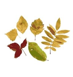 Set of autumn leaves for your design vector image