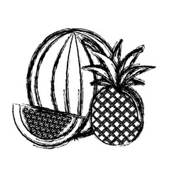 Contour watermelon and pineapple fruit icon vector