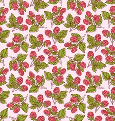 Raspberries pattern vector image vector image