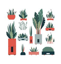 set of flowers in pots vector image