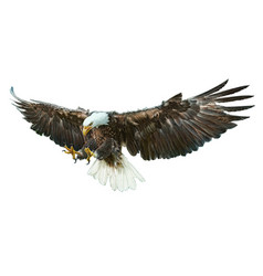 bald eagle winged vector image