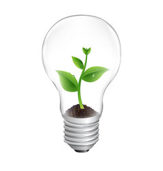 bulb with green sprout white background vector image
