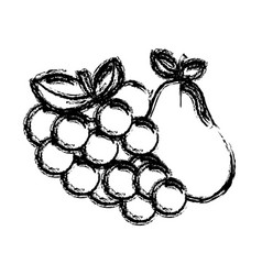 Contour grape and pear fruits icon vector