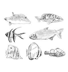 Sea and ocean types fish hand drawn set vector