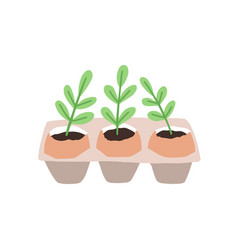 sprouts or seedlings growing in pots or planters vector image