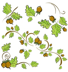 acorns and oak leaves vector image