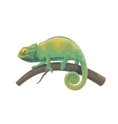 Chameleon lizard green tropical reptile animal vector