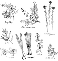 Hand drawn medical and aromatic plants vector