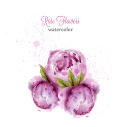 rose flowers watercolor wreath card vector image