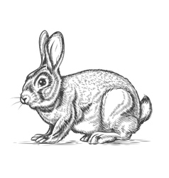 Hand drawn rabbit in engraving style vector image vector image