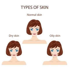Types of skin Oily normal and dry vector image vector image