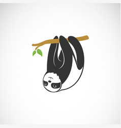 cute sloth hanging on the tree branch on white vector image