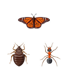 design of insect and fly logo set of vector image