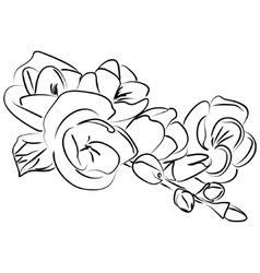 Ink sketch freesia flower vector