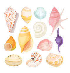 Sea shells set on white vector