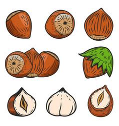 set of hazelnuts icons isolated on white vector image