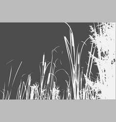 silhouette of reed bush vector image