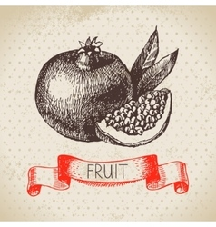 Hand drawn sketch fruit pomegranate Eco food vector image vector image