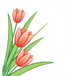 bunch of red tulips vector image