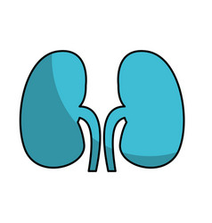 Human organ kidneys icon vector