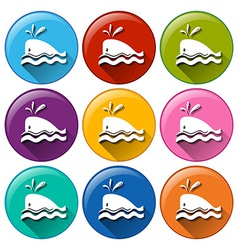 Whale icons vector image