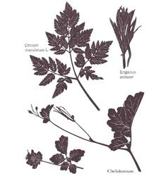 Set Herbarium of grass leaf vector image