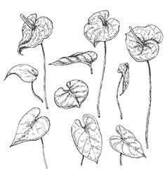 Doodle anthurium vector