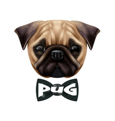 Realistic pug dog portrait vector