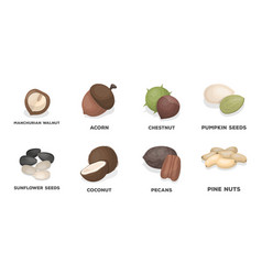 Different kinds of nuts icons in set collection vector
