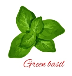 Green basil herb leaves isolated icon vector