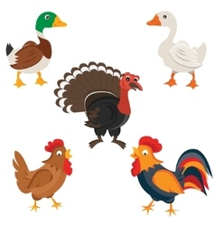 Isolated Farm birds in cartoon style vector image