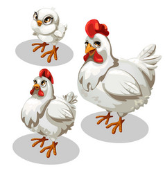 maturation stages chicken cartoon style vector image