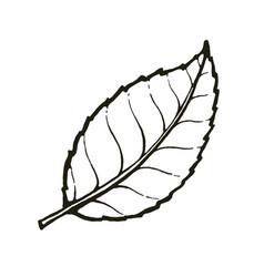 one leaf tea or mint vector image