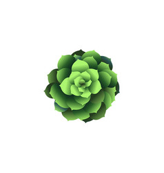 top view green houseplant icon plant in pot vector image