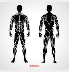 Body type ectomorph front and back view vector