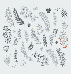Decorative floral elements for design projects vector