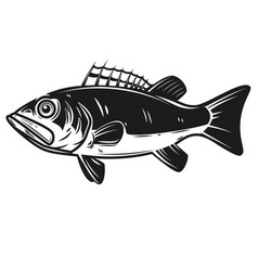 Sea bass icon perch design element for logo vector